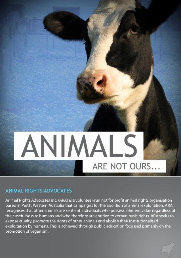 Animal Cruelty Essay Outline New Animal Testing Persuasive Speech Mfacourses826 Web Fc2