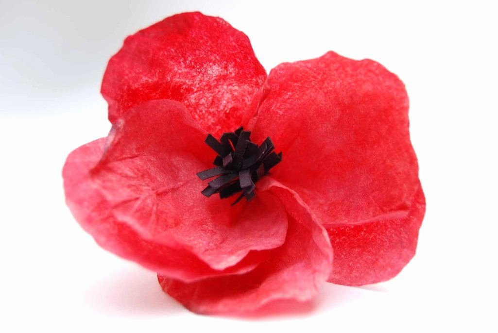 Coffee Filter Roses Template Best Of Coffee Filter Poppy Diy Same Instructions for Filters as