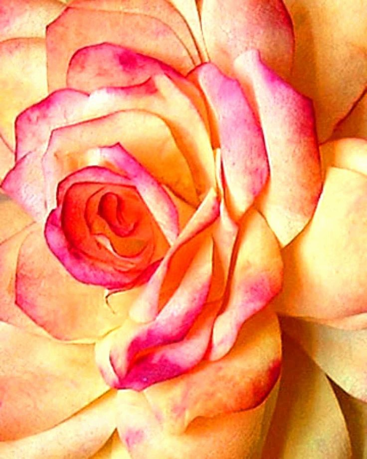 Coffee Filter Roses Template Inspirational 17 Best Ideas About Paper Craft Templates On Pinterest