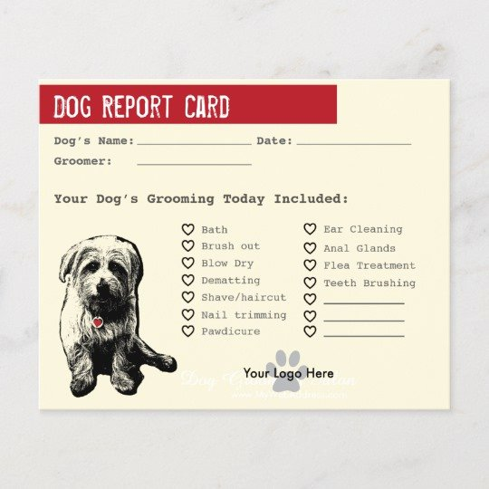 Dog Boarding Report Card Template Beautiful Motorcycle Flyers