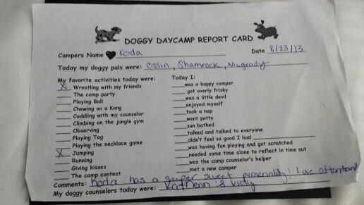 Dog Daycare Report Card Awesome Report Card From Best Friends Doggy Daycare Barkworld