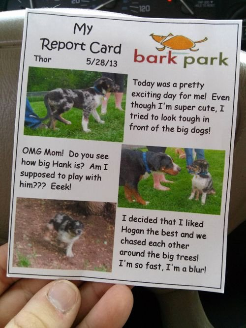Dog Daycare Report Card Elegant 7 Ways to Show Customers You Care
