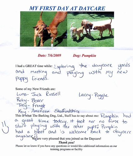 Dog Daycare Report Card Inspirational Report Card for the First Day Of Doggie Daycare Yelp