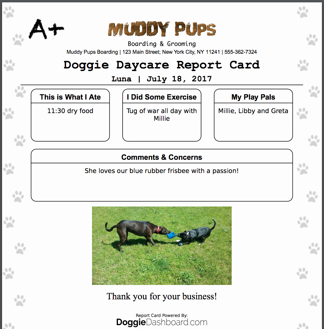 Dog Daycare Report Card Luxury Doggiedashboard