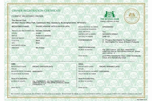 Fake Car Title Templates Best Of Registration Certificates for Dog Owners – the Kennel Club