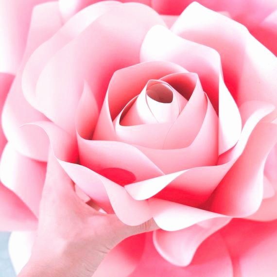 Giant Rose Template Fresh Printable Pdf Paper Rose Templates Giant Paper Rose