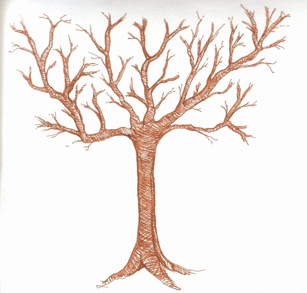 How to Draw A Simple Tree without Leaves Best Of Tree Drawing without Leaves at Getdrawings