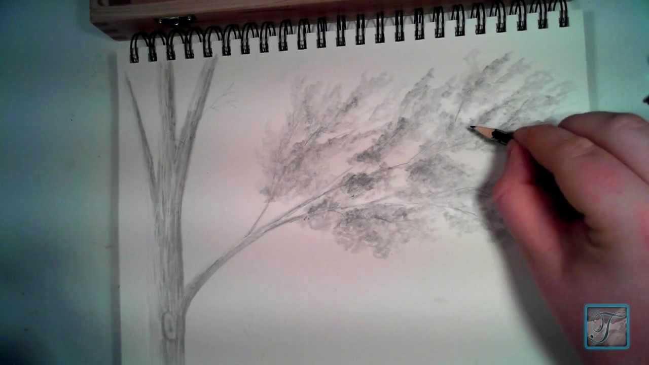 How to Draw A Simple Tree without Leaves Elegant How to Draw Realistic Looking Leaves