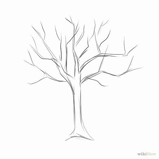 How to Draw A Simple Tree without Leaves Inspirational O Desenhar árvores Melhores Esboço Outono Mão torta