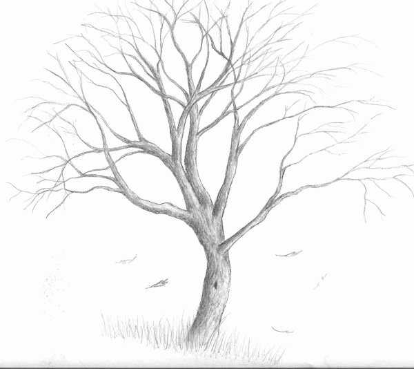 How to Draw A Simple Tree without Leaves Inspirational Tree Drawing