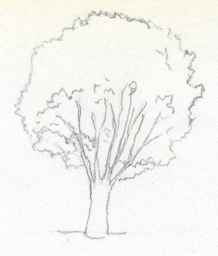 How to Draw A Simple Tree without Leaves Lovely Draw A Tree Simply and Easily