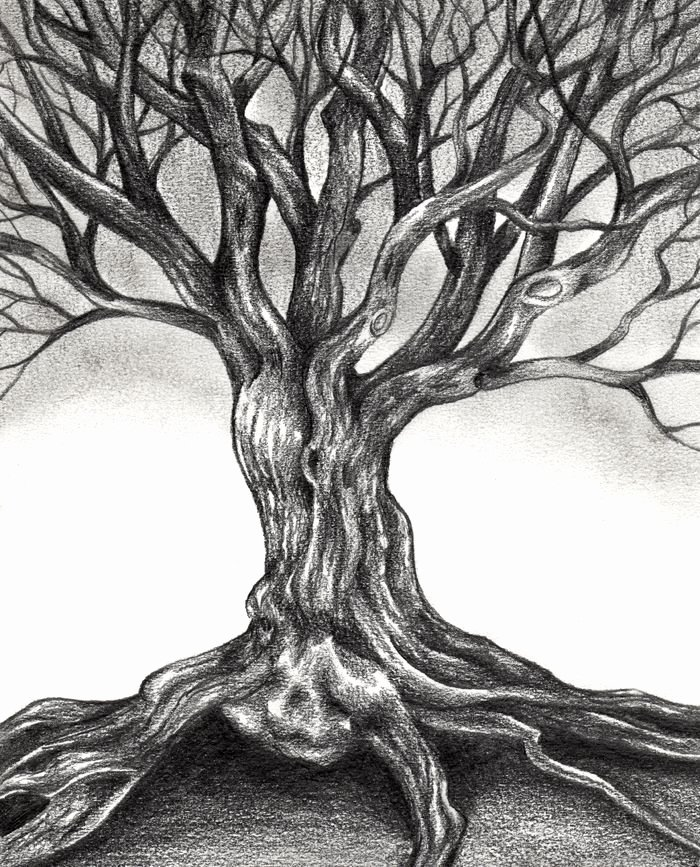 How to Draw A Simple Tree without Leaves Luxury Tree Drawing Dr Odd Trees Pinterest