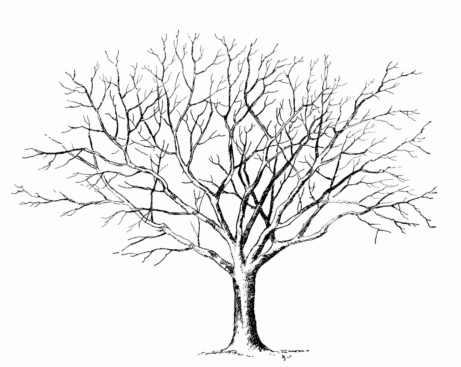 How to Draw A Simple Tree without Leaves Luxury Tree Drawing No Leaves at Getdrawings