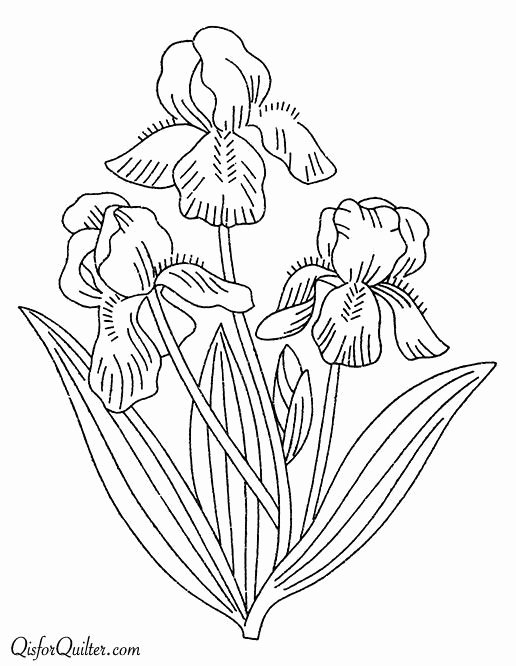 Iris Flower Outline Beautiful 252 Best Line Drawings Of Irises Images On Pinterest