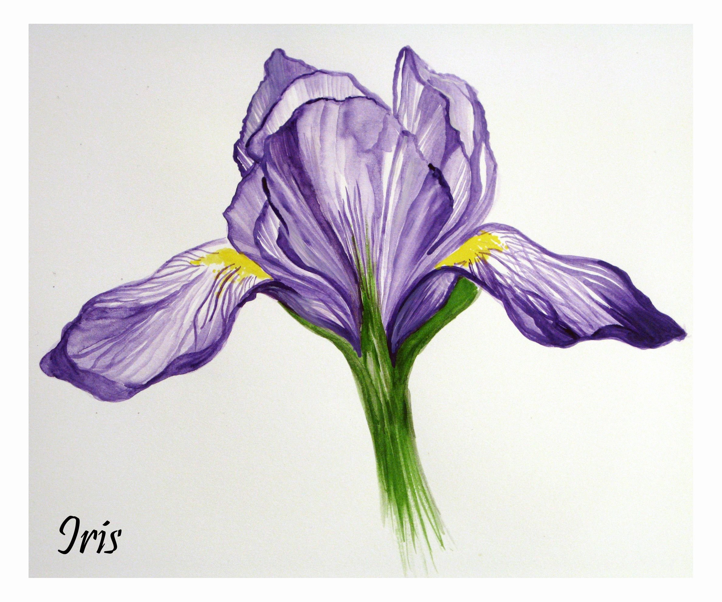 Iris Flower Outline Best Of