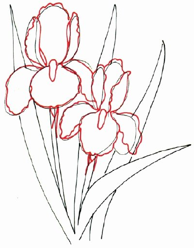 Iris Flower Outline Fresh Cartoon How to Draw An Iris In 5 Steps