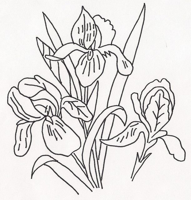 Iris Flower Outline Lovely 238 Best Images About Line Drawings Of Irises On Pinterest