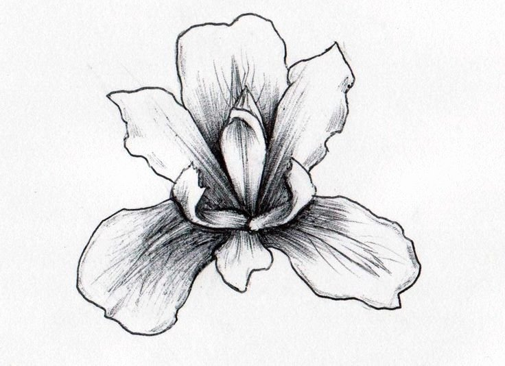 Iris Flower Outline Luxury Iris Flowers Drawings Flowers Tree Of Life V98nwmjg0n