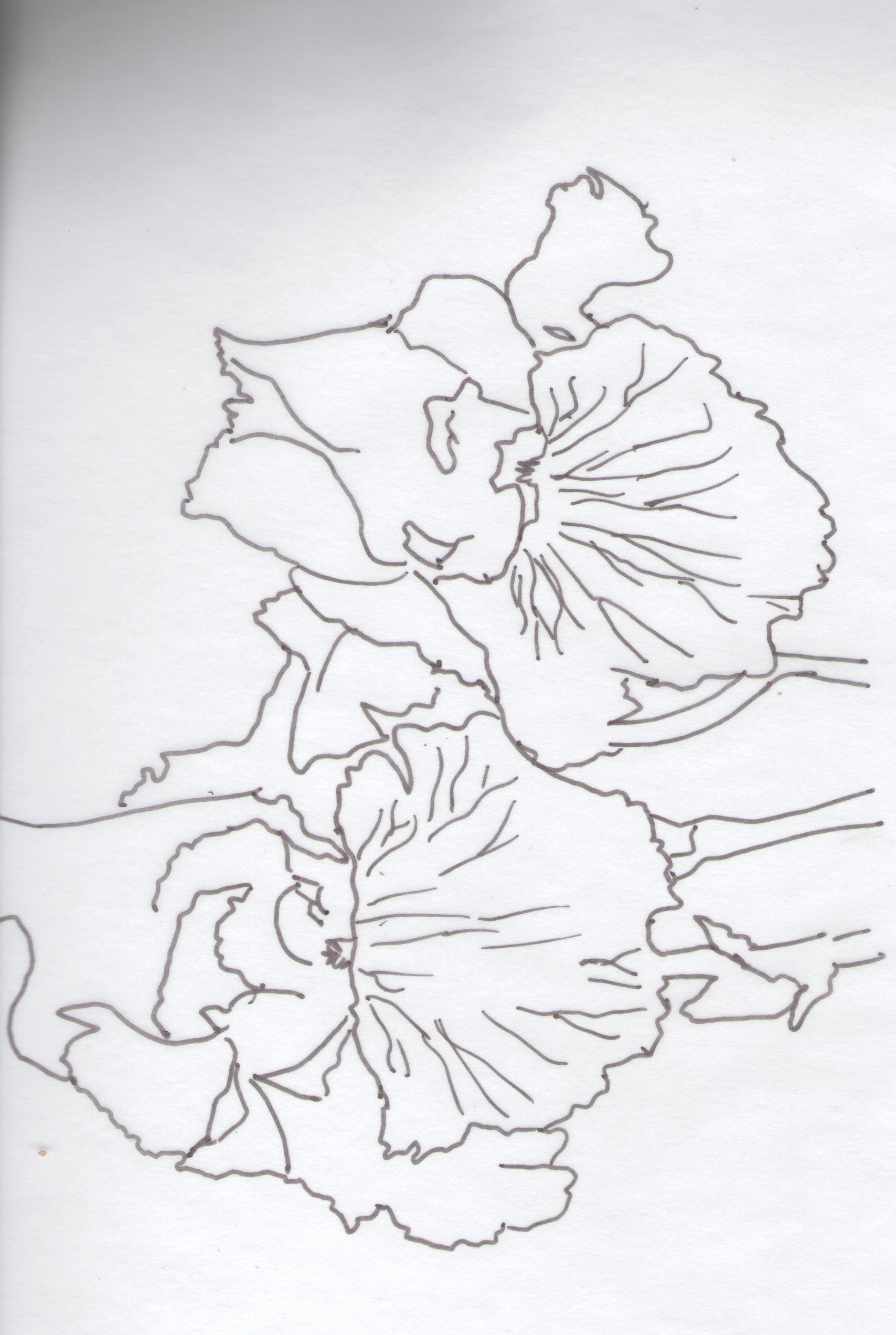 Iris Flower Outline Unique Iris Art Lesson