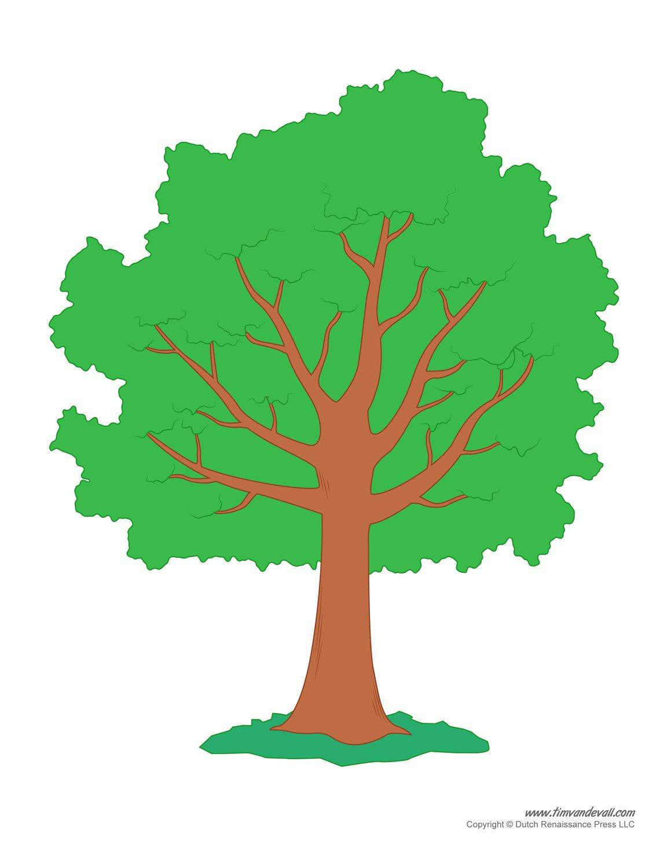 Large Tree Template Inspirational Tim Van De Vall Ics & Printables for Kids