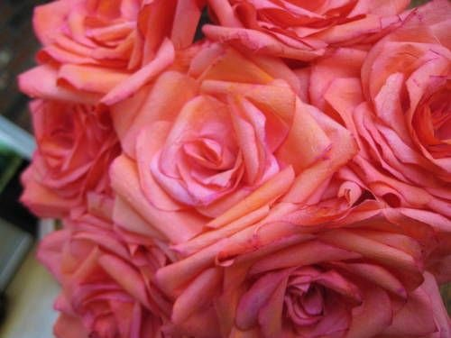 Martha Stewart Coffee Filter Roses Awesome 130 Best Images About Flowers Coffee Filters Tuts & Ideas