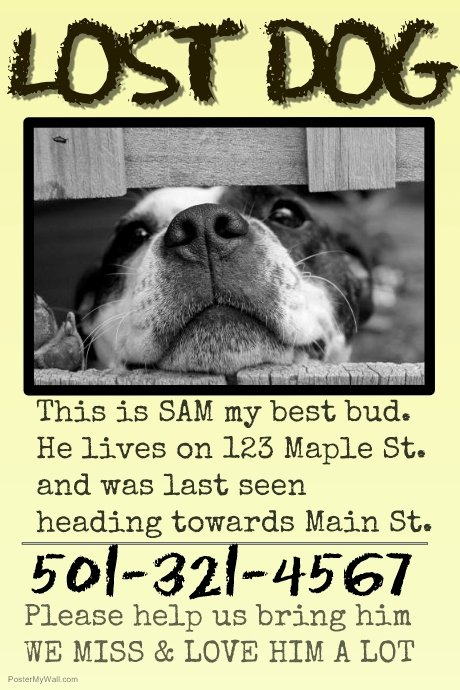 Missing Dog Template Awesome Copy Of Missing Pet Lost Dog Cat Family