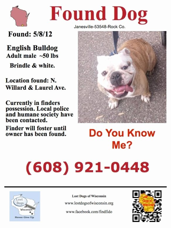 Missing Dog Template Best Of Found Male Englishbulldog In Janesville Wi who's