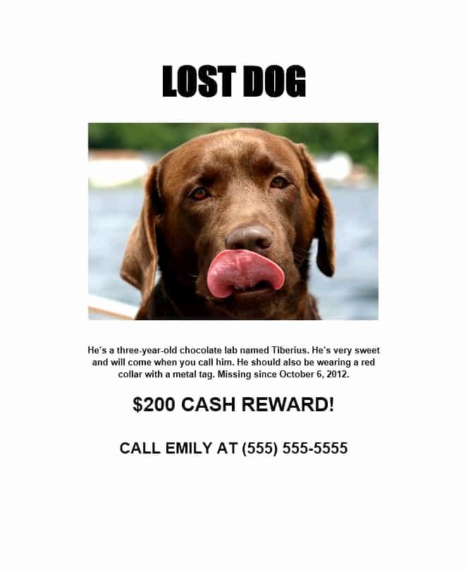 Missing Dog Template Fresh 40 Lost Pet Flyers [missing Cat Dog Poster] Template