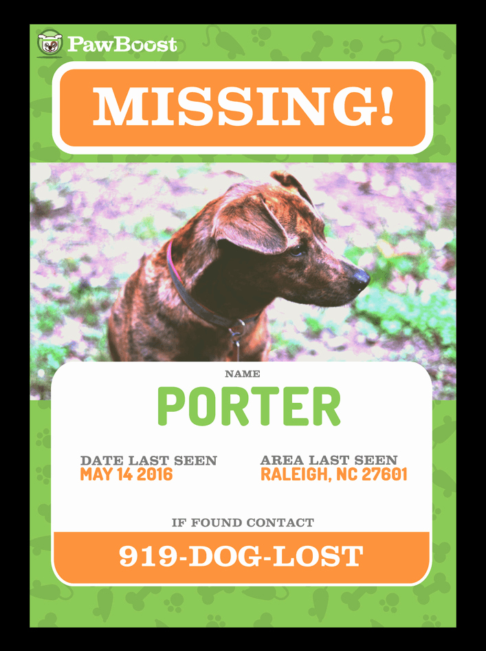 Missing Dog Template Inspirational Find Your Lost Pet