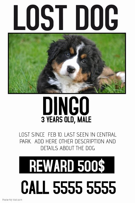 Missing Dog Template Luxury Lost Dog Lost Pet Color Poster Template