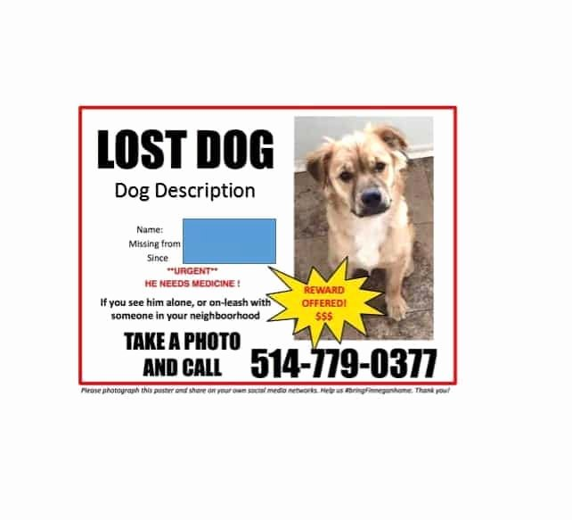 Missing Dog Template New 40 Lost Pet Flyers [missing Cat Dog Poster] Template