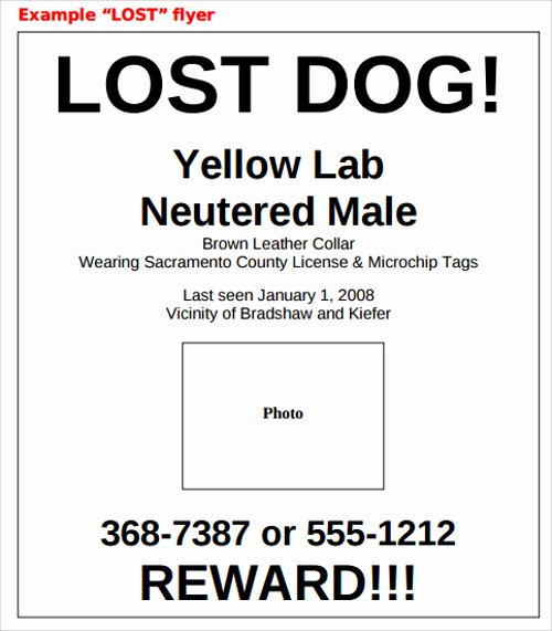 Missing Dog Template New Lost Dog Flyer Template 7 Download Documents In Vector