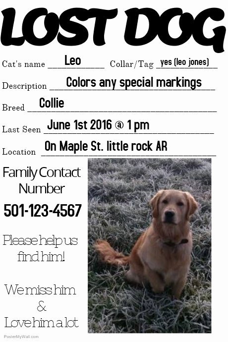 Missing Dog Template Unique Lost Dog Missing Loved One Family Template