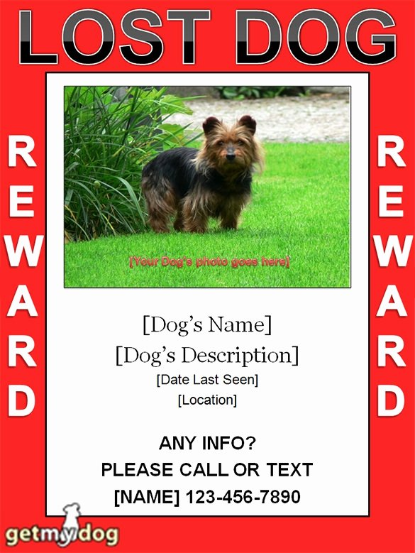 Missing Dog Template Unique Missing Dog Poster Template Invitation Template