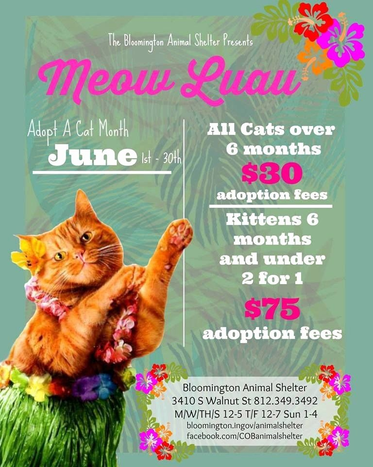 Persuasive Speech Outline Animal Adoption Beautiful Bloomington Animal Shelter Adoption Poster