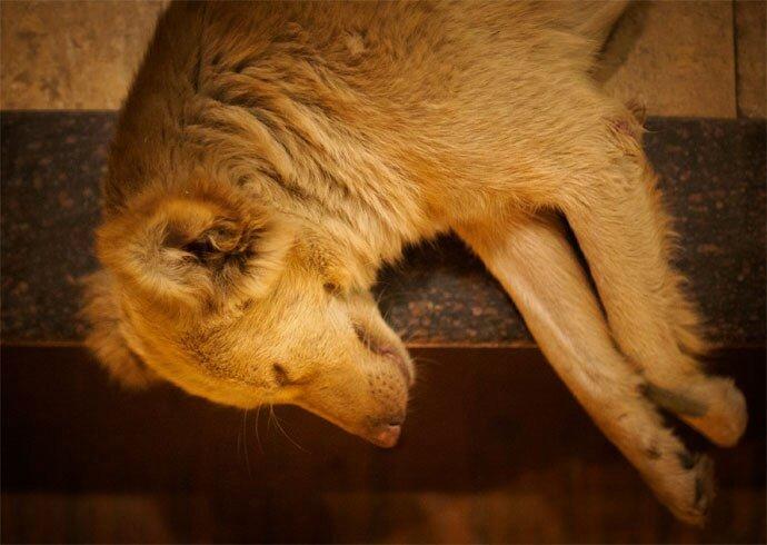 Persuasive Speech Outline Animal Adoption Best Of A Marketing Manager Paper Sample Vivaessay Speech Help