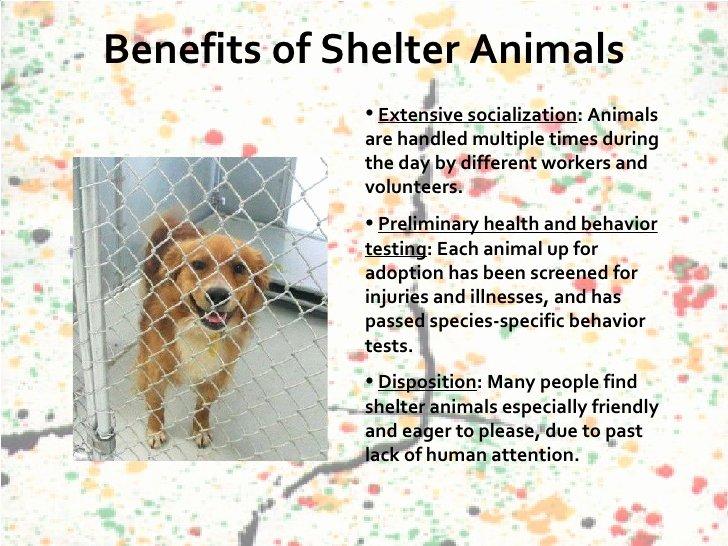 Persuasive Speech Outline Animal Adoption Lovely Animal Shelters