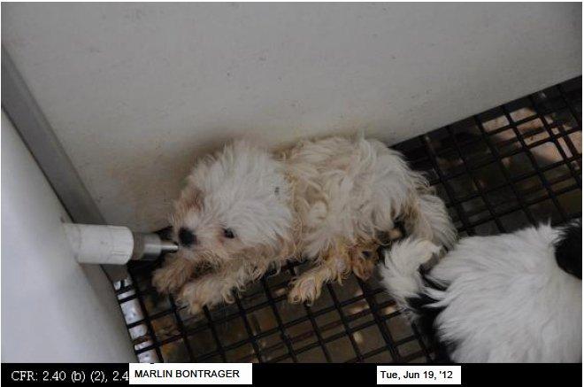 Persuasive Speech Outline Animal Adoption Unique Persuasive Puppy Essay Mill thesis