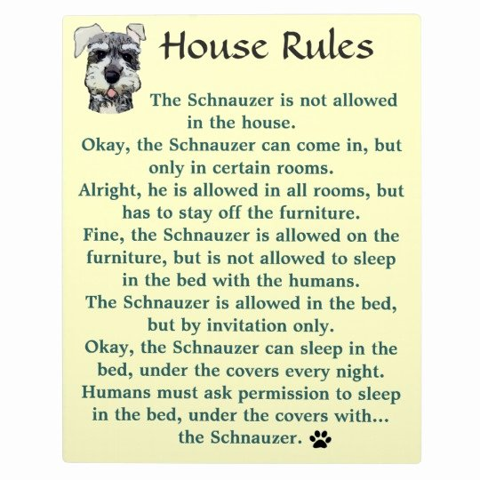 Rent House Rules Awesome House Rules for Schnauzers Plaque