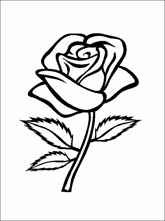 Rose Template Printable Elegant Flower Page Printable Coloring Sheets