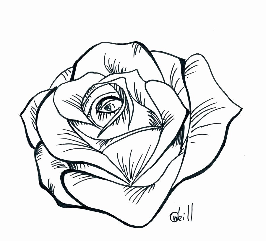 Rose Template Printable Fresh Rose Drawing Stencil at Getdrawings