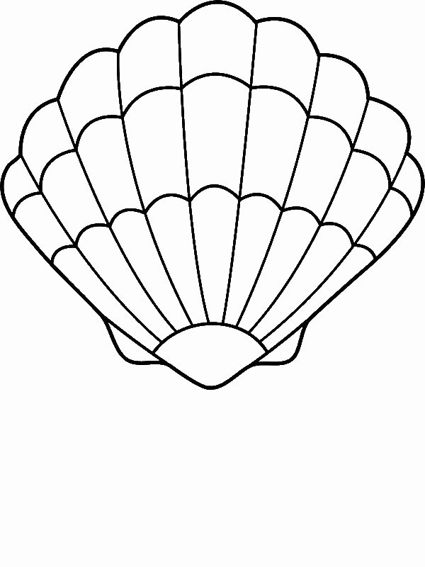 Seashell Template Printable Fresh A Lovely Zigzag Scallop Seashell Drawing Coloring Page by