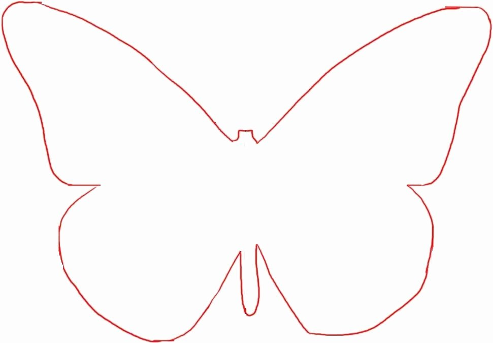 Small butterfly Template Elegant Small butterfly Template