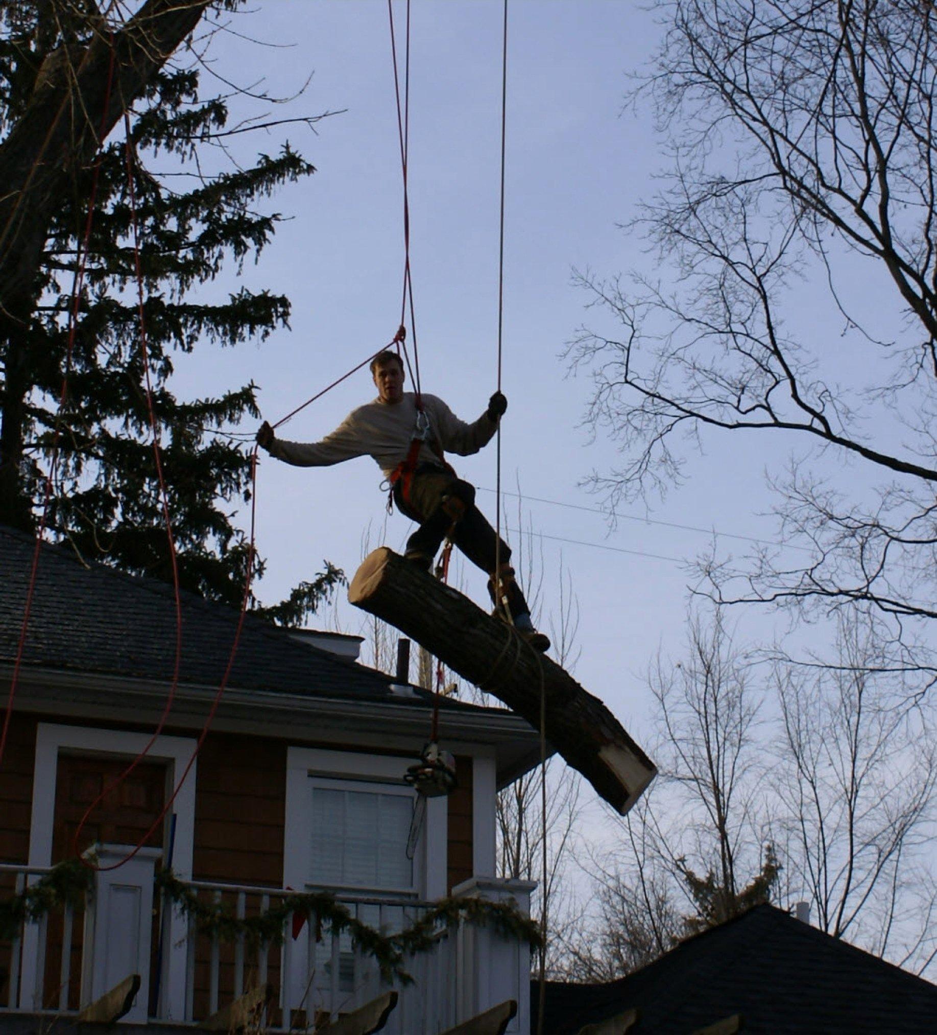 Tree Trimming Estimate Template Best Of Royal Oak Michigan Tree Service
