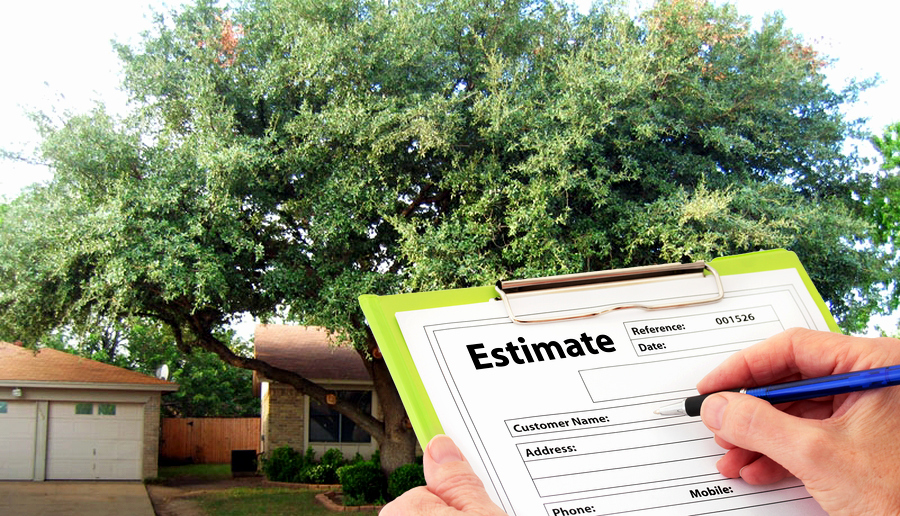 Tree Trimming Estimate Template Luxury Get A Free Tree Service Estimate From Trapp S Tree Service