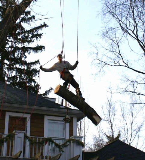Tree Trimming Estimate Template Luxury Michigan Tree Service Tree Removal Tree Trimming Stump